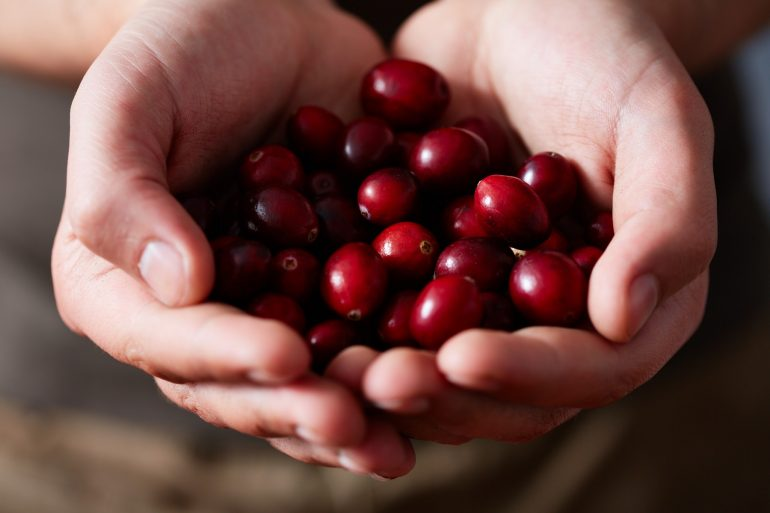 cranberries-held-in-hands