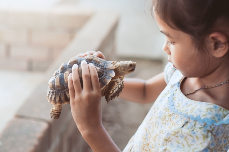 Getting your kid a pet for Christmas child with tortoise
