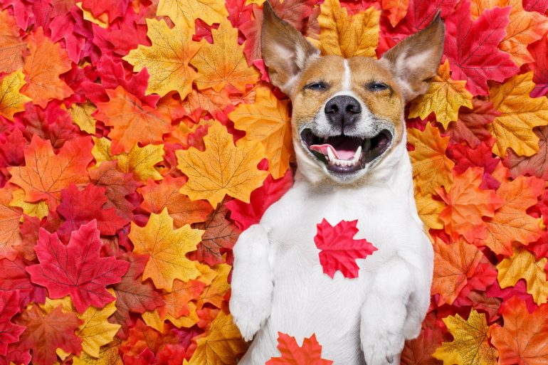 cbd for pets happy dog in fall leaves